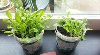 Planten en bloemen vitaal water groei en bloei test